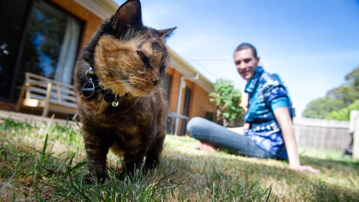 Chris Richards says his tortoiseshell cat Cyndi has helped with his mental health. Picture: Elesa Kurtz